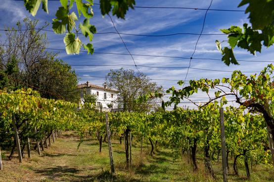 Vineyard dream