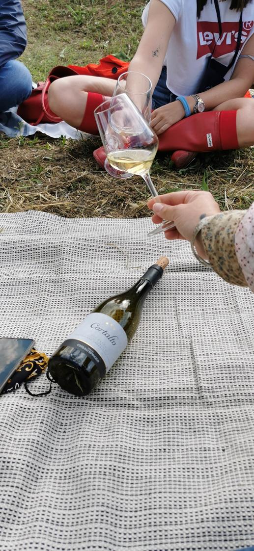 Vineyards softness