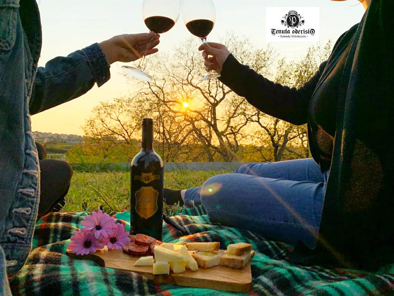 Pic nic in vineyard